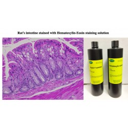 Hematoxylin Eosin Staining KIT