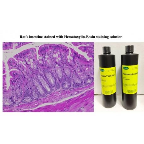 Hematoxylin Eosin Staining KIT